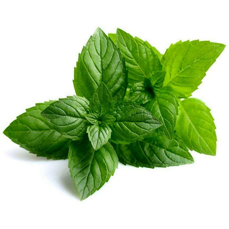 Peppermint Seeds (Mentha piperita)