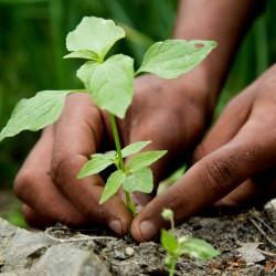 Seeds Gallery Guía Profundidad de plantación 0 - 2