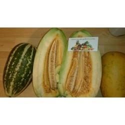 Dinja Seme Thai Musk Melon