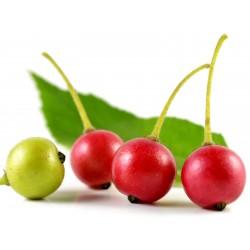 Semillas de cereza de Jamaica 1.95 - 3