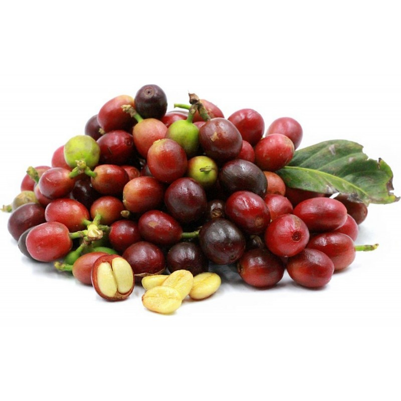 Semi di Pianta del caffè (Coffea arabica) 2.55 - 1