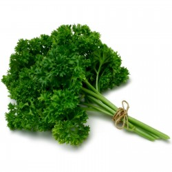 "Parsley Seeds ""Mooskrause"" 1.55 - 2"