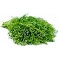 Herb Dill Bouquet Seeds 1.6 - 4