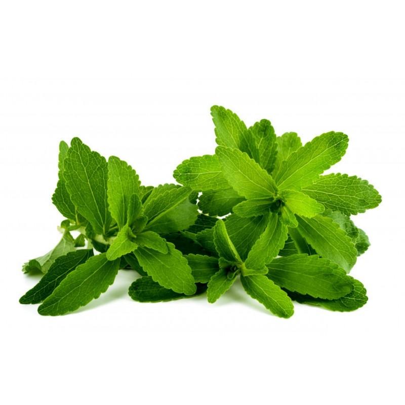 Stevia rebaudiana Frön 'Sweet Herb' 1.9 - 2