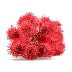 Ricin Frön (växt) (Ricinus communis) 1.85 - 7