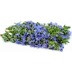 Rosmarin Samen Saatgut - Heilpflanze 2.5 - 4