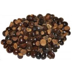GUARANA Seeds (Paullinia Cupana) 5 - 3