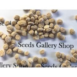 Σπόροι Panax Ginseng (τζίνσενγκ) Ένα θαυματουργό βότανο 2.5 - 6