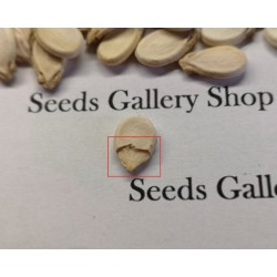 "Yellow Watermelon Seeds ""Moon and Stars"" 1.95 - 6"