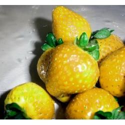 Gelbe Erdbeere Samen Yellow Wonder