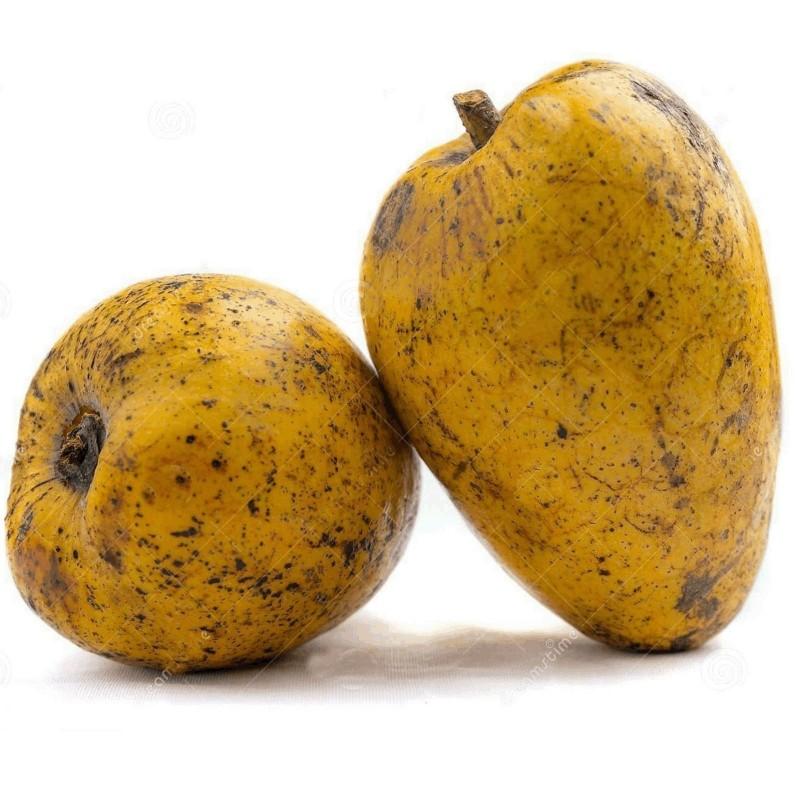 Pond Apple Seme - Tropsko Egzoticno Voce (Annona glabra) 1.85 - 5