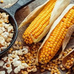 100 Semillas de palomitas de maíz - Cultiva tu propio 3 - 3