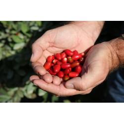 Semillas de Fruta Milagrosa o Baya Mágica 4.95 - 6