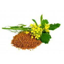 Σπόροι Καφέ μουστάρδα (Brassica juncea) 1.95 - 4