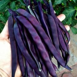 Blauhilde Bean Seeds 1.95 - 1