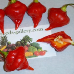 Semi di Peperoncino Habanero Kreole (C. chinense) 2 - 2