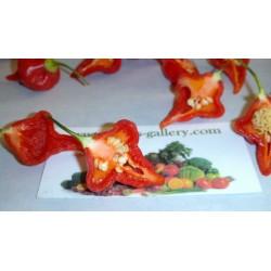 Semi di Peperoncino Habanero Kreole (C. chinense) 2 - 12