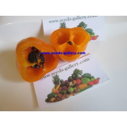 Semillas de Rocoto Manzano chile 2.5 - 6