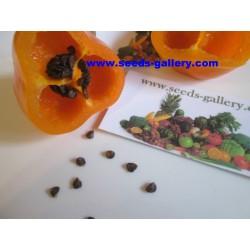 Rocoto Manzano Chili Samen 2.5 - 8