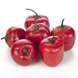 Cili Seme - Chili Inka - Rocoto Manzano 2.5 - 2