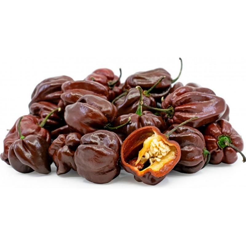 Semi di Peperoncini Habanero Chocolate 2 - 3