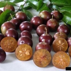 Graines de Prune Malgache...