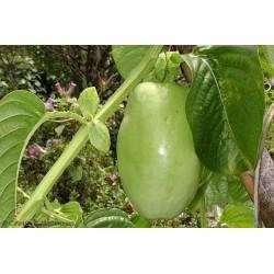 Graines de Grenadille Géante (Passiflora quadrangularis) 2.5 - 5
