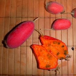 Manchu Tubergourd, Wild Potato Seeds (Thladiantha dubia) 3.75 - 1
