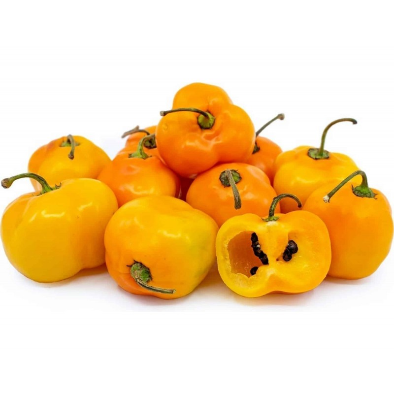 Semillas de Rocoto Manzano chile