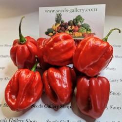 100 Semillas de Chile Habanero Rojo 5.45 - 3