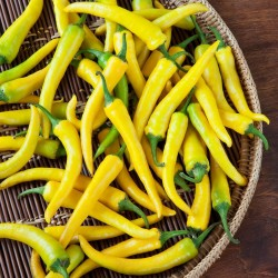 "Serbian hot chilli 150+ Seeds ""Yellow Feferona"" 2.85 - 3"