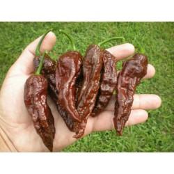 Graines de Piments Bhut Jolokia