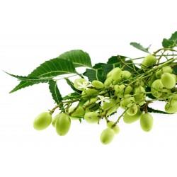 Nim Lekovita Indijska Biljka Seme 2.5 - 4