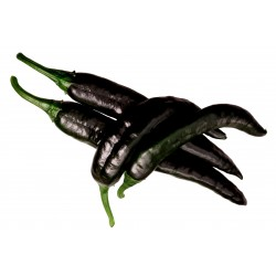 Pasilla Bajio Frön Black Chili (Capsicum annuum) 1.95 - 6