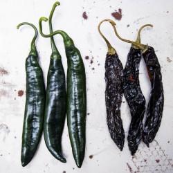Crni Chili Seme ''Pasilla Bajio'' 1.95 - 4