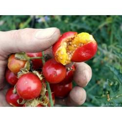 Litchi Tomato Seeds (Solanum sisymbriifolium) 1.8 - 10