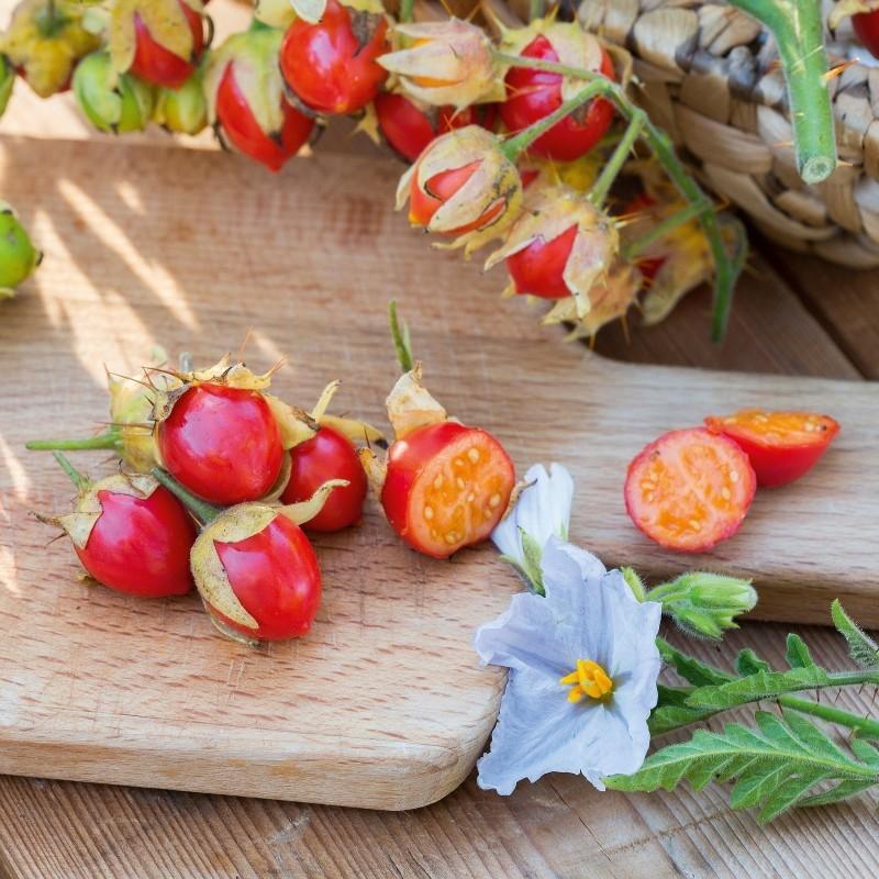 Pomodoro del Litchi 1000 Semi 85 - 11