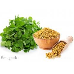 Σπόροι Τριγωνέλλα η Ελληνική (Trigonella foenum-graecum) 1.55 - 2
