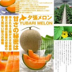 Yubari King Melon Seeds The...