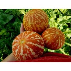 Σπόροι Αρμενίων Πεπόνι Tigger 2.95 - 5
