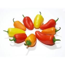 Hot Chilli Pepper Seeds SANTA FE GRANDE - GUERO 1.55 - 6