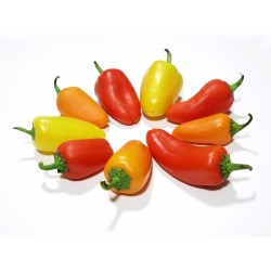 SANTA FE GRANDE - GUERO - Chili Samen 1.55 - 6
