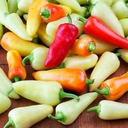 Sementes de Pimenta SANTA FE GRANDE - GUERO 1.55 - 4