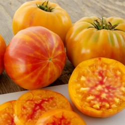 Semillas de tomate BIG RAINBOW 2.5 - 4