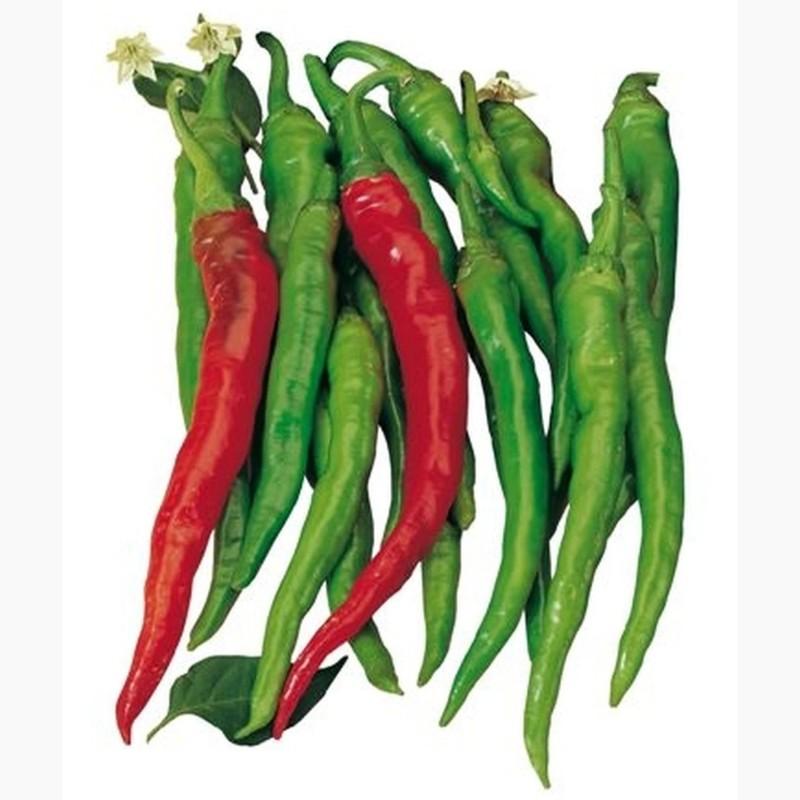SIGARETTA süße Chili Samen 1.45 - 3