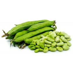 Semillas de Haba (Vicia faba) 2.55 - 6