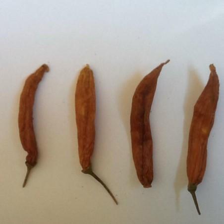 Cili Aji Patillo seme (Capsicum pendulum) 2.25 - 1