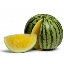 Gelbe Wassermelone Samen super süss 2.55 - 1
