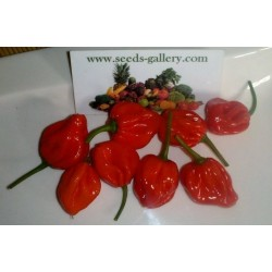 Scotch Bonnet Trinidad Seeds