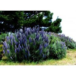 """""""Ponos Madeire"""" Seme 1.5 - 11"""